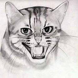 Comment Dessiner Les Chats Apprendre à Dessiner Les Animaux Grâce à