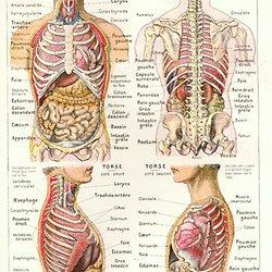 Medecine Et Sante Anatomie Du Corps Humain Organes Ossature
